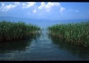 jezero 137
